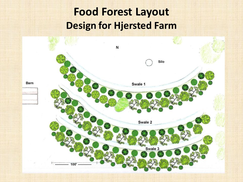 Food Forest Layout Design for Hjersted Farm