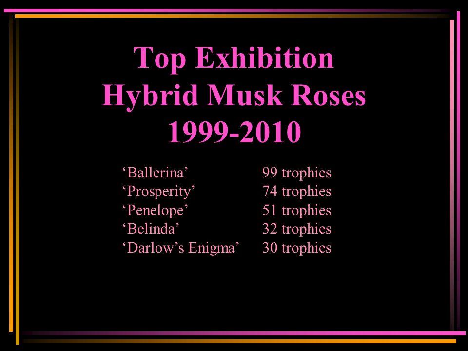 Top Exhibition Hybrid Musk Roses 1999-2010 'Ballerina'99 trophies 'Prosperity'74 trophies 'Penelope'51 trophies 'Belinda'32 trophies 'Darlow's Enigma'