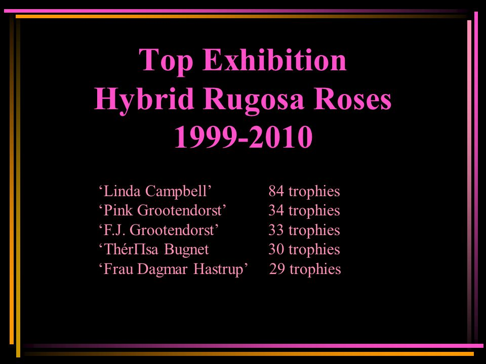 Top Exhibition Hybrid Rugosa Roses 1999-2010 'Linda Campbell' 84 trophies 'Pink Grootendorst' 34 trophies 'F.J.