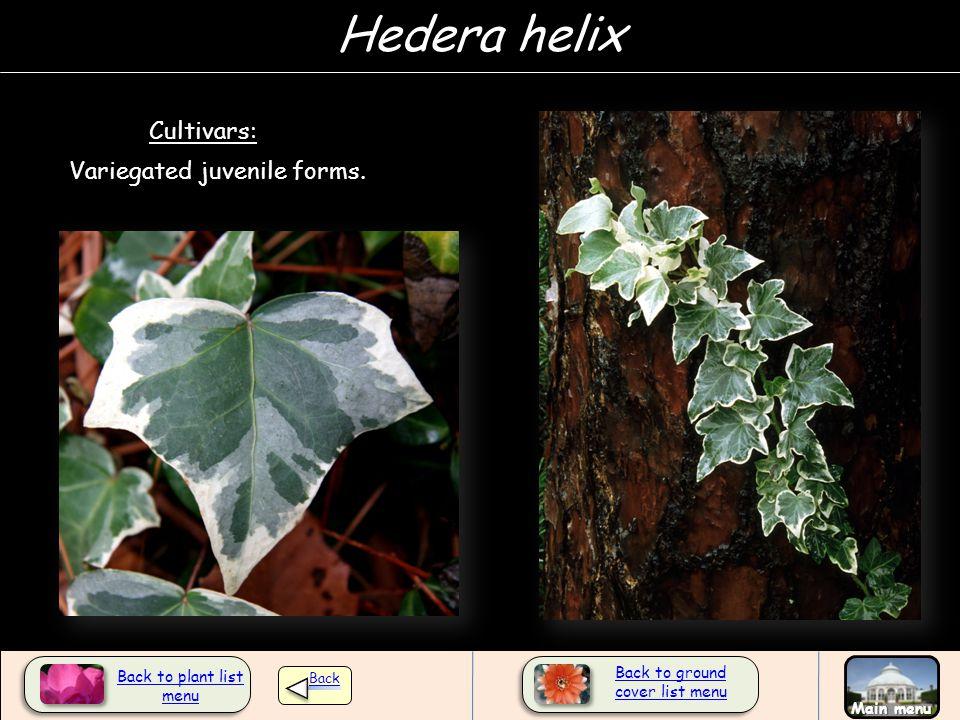 Variegated juvenile forms. Cultivars: Back to plant list menu Back Main menu Hedera helix Back to ground cover list menu
