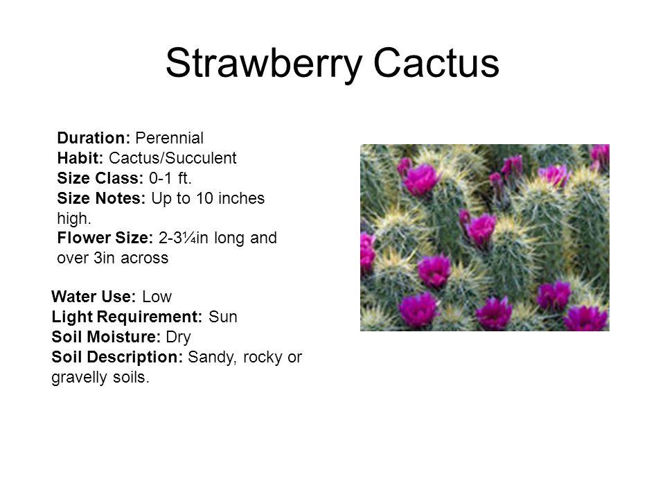 Strawberry Cactus Duration: Perennial Habit: Cactus/Succulent Size Class: 0-1 ft.