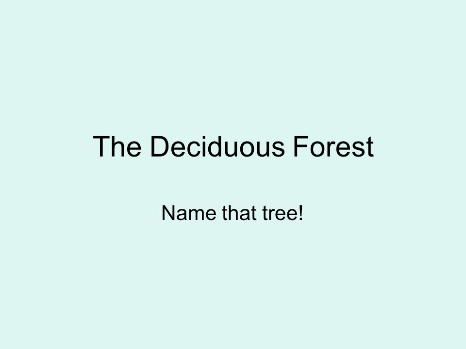 The Deciduous Forest Name that tree!