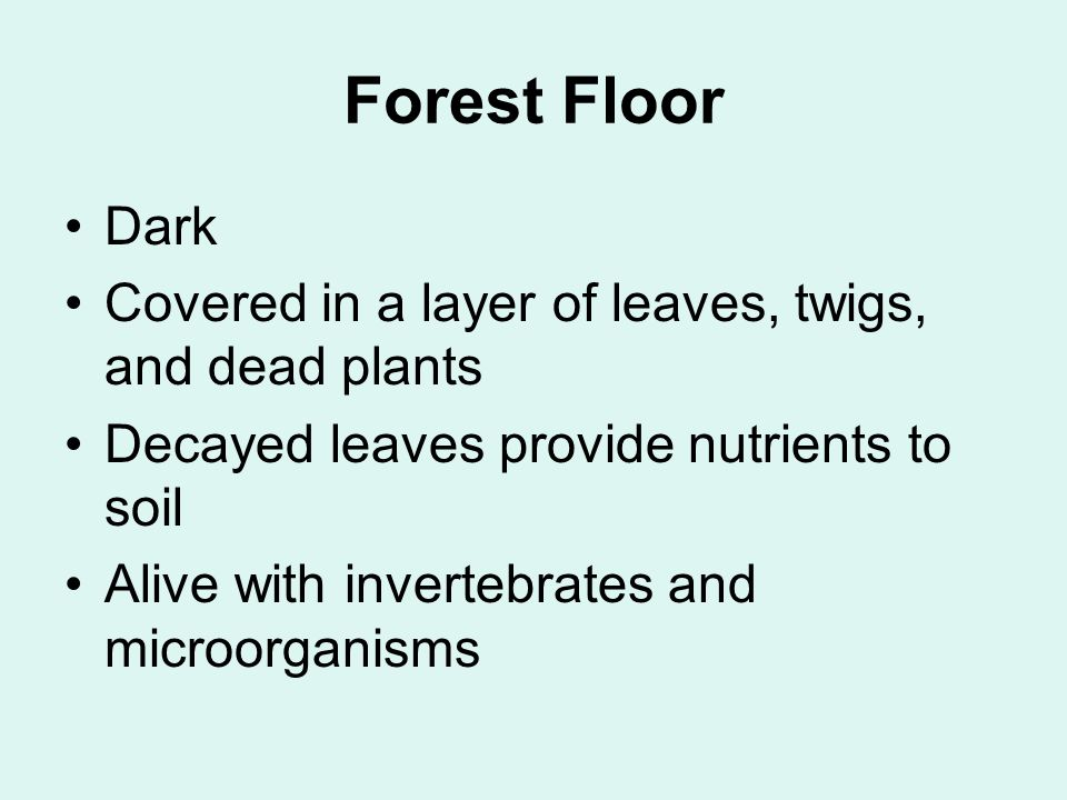 Dark Covered in a layer of leaves, twigs, and dead plants Decayed leaves provide nutrients to soil Alive with invertebrates and microorganisms
