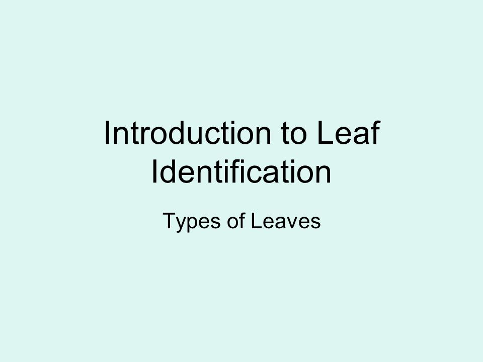 Introduction to Leaf Identification Types of Leaves
