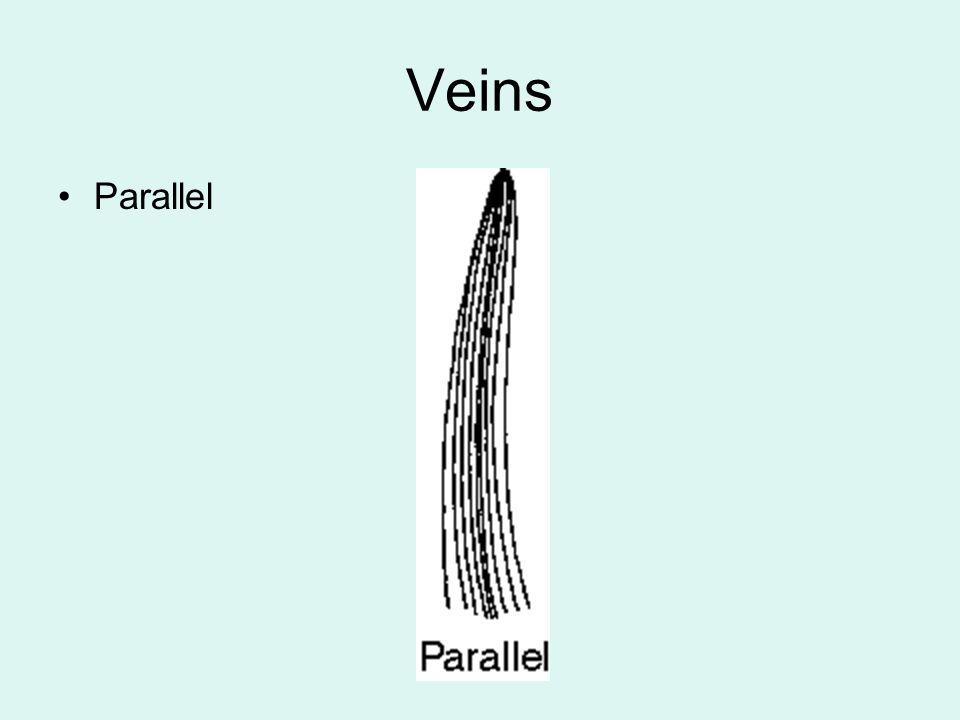 Veins Parallel