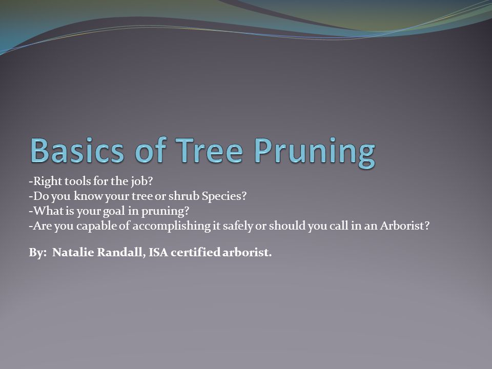 -Right tools for the job? -Do you know your tree or shrub Species? -What is your goal in pruning? -Are you capable of accomplishing it safely or shoul