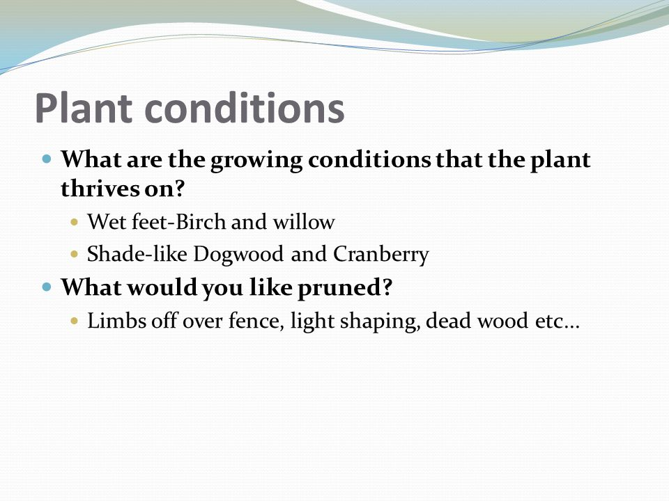 Plant conditions What are the growing conditions that the plant thrives on? Wet feet-Birch and willow Shade-like Dogwood and Cranberry What would you