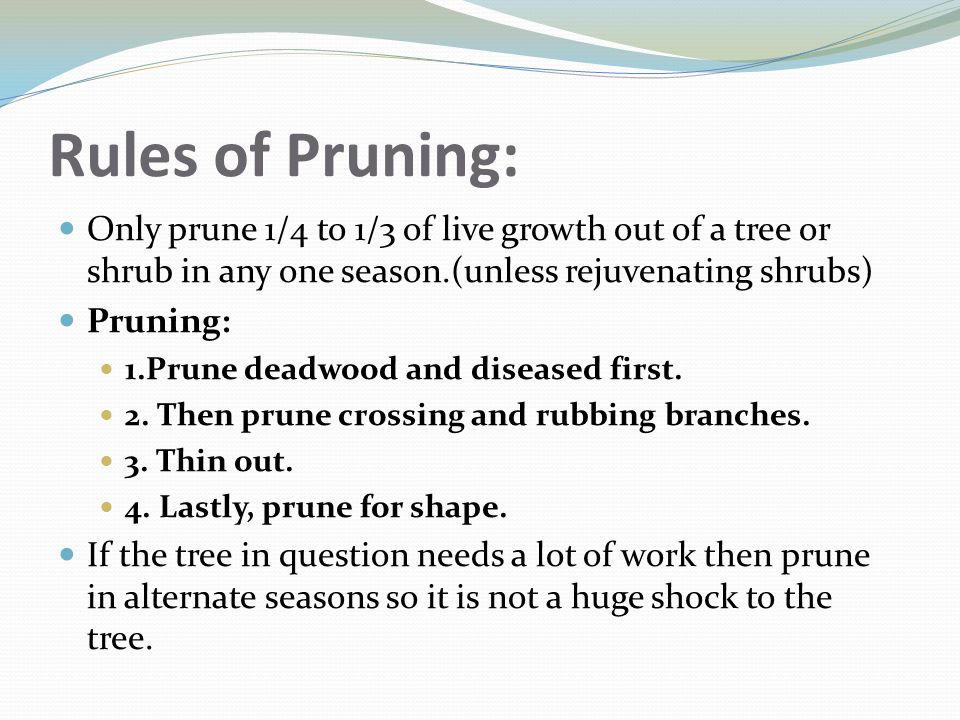 Rules of Pruning: Only prune 1/4 to 1/3 of live growth out of a tree or shrub in any one season.(unless rejuvenating shrubs) Pruning: 1.Prune deadwood