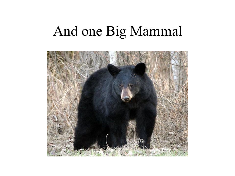 And one Big Mammal