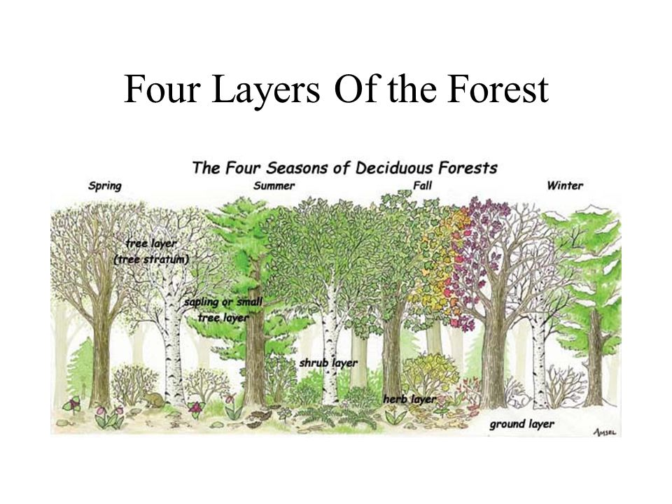 Four Layers Of the Forest