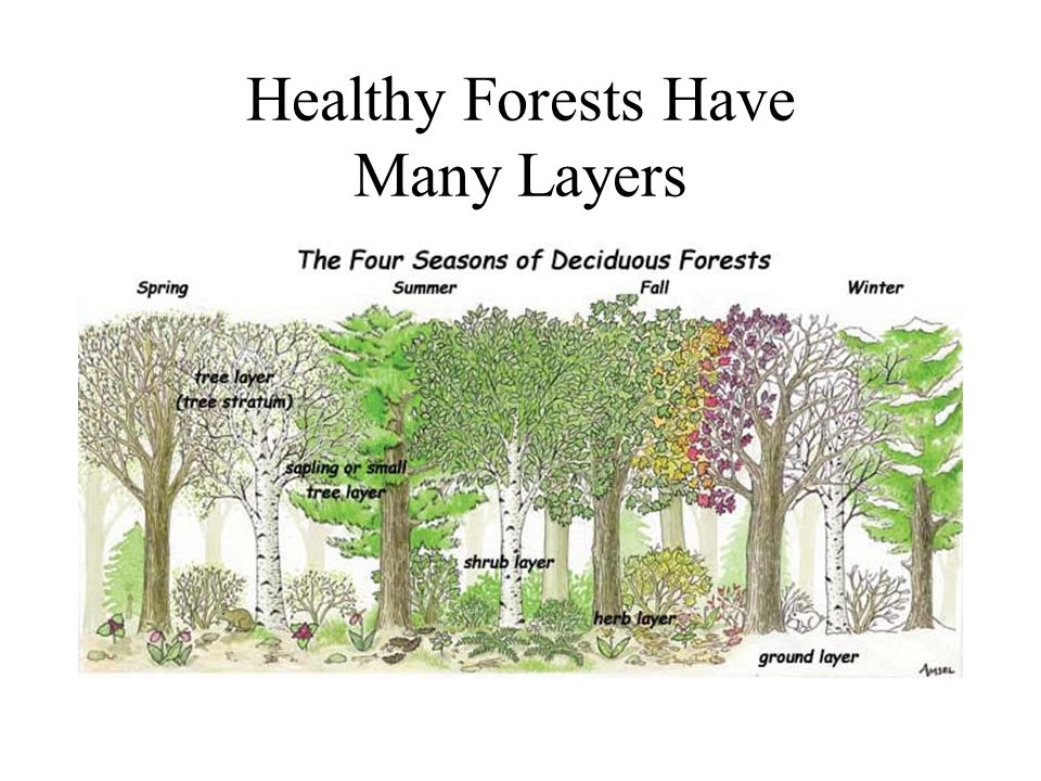Healthy Forests Have Many Layers