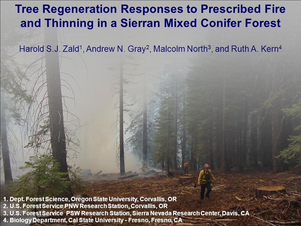 Results: Germinant Survival Responses to Treatments Low survival of pine germinants in controls and unburned/understory thin High survival of pine germinants in burn/thinned Low survival of fir germinants in thins Low survival of incense- cedar germinants in overstory thin
