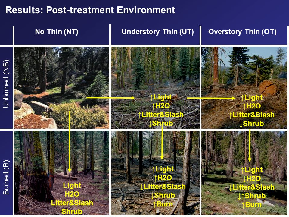 No Thin(NT)Understory Thin(UT)Overstory Thin (OT) Burned (B)Unburned (NB) Results: Post-treatment Environment ↑Light ↑H2O ↑Litter&Slash ↓Shrub ↑Light