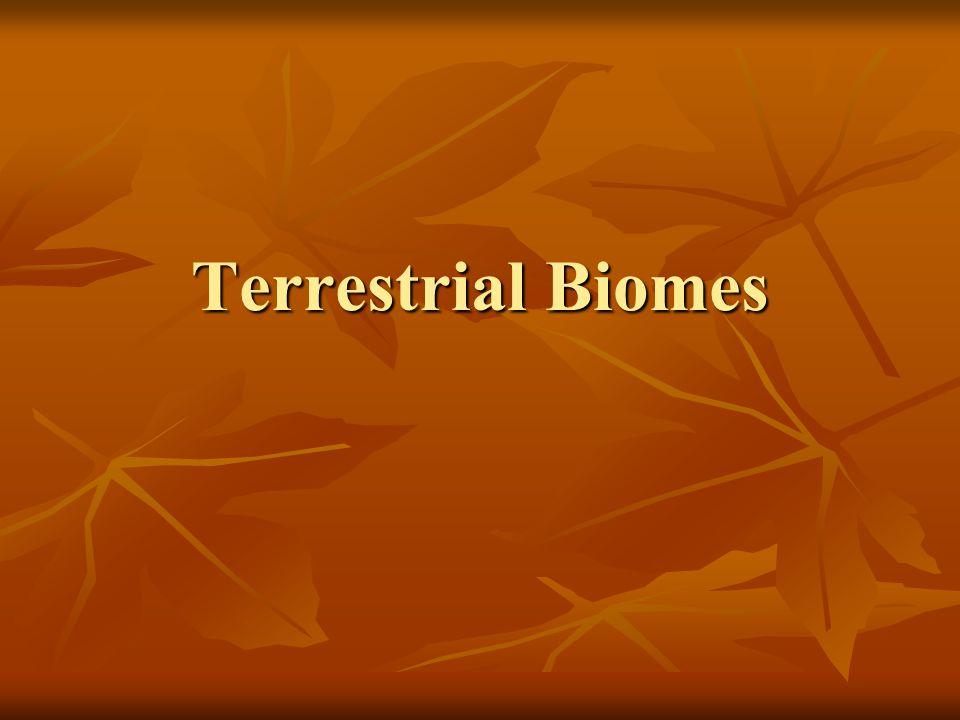 Evergreen tropical rainforest This biome occurs under tropical climates with abundant precipitation and no seasonal drought.