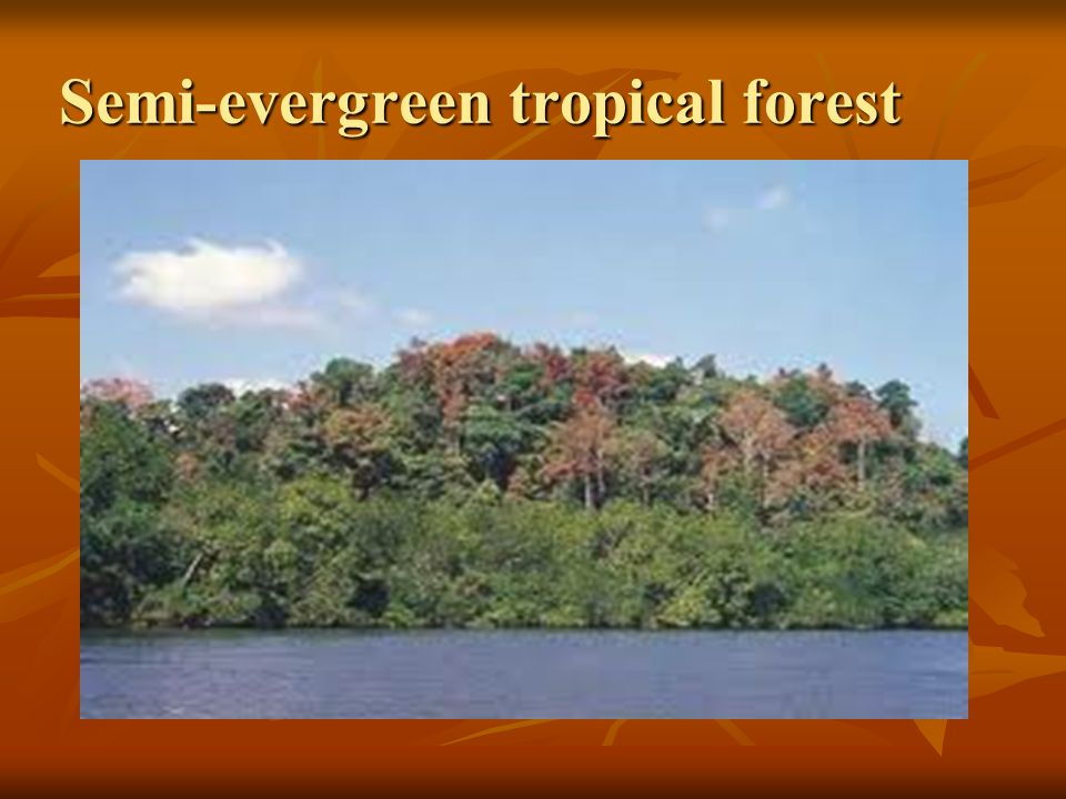 Semi-evergreen tropical forest