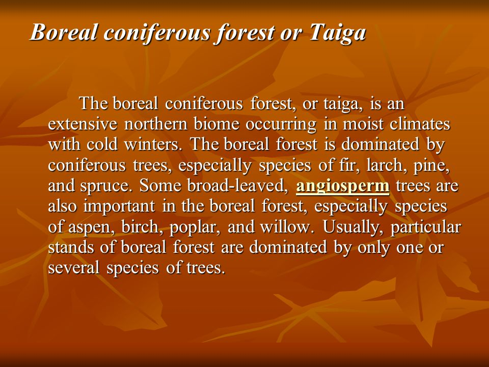 Most regions of boreal forest are subject to periodic events of catastrophic disturbance, most commonly caused by wildfire and sometimes by insects, such as spruce budworm, that kill trees through intensive defoliation.