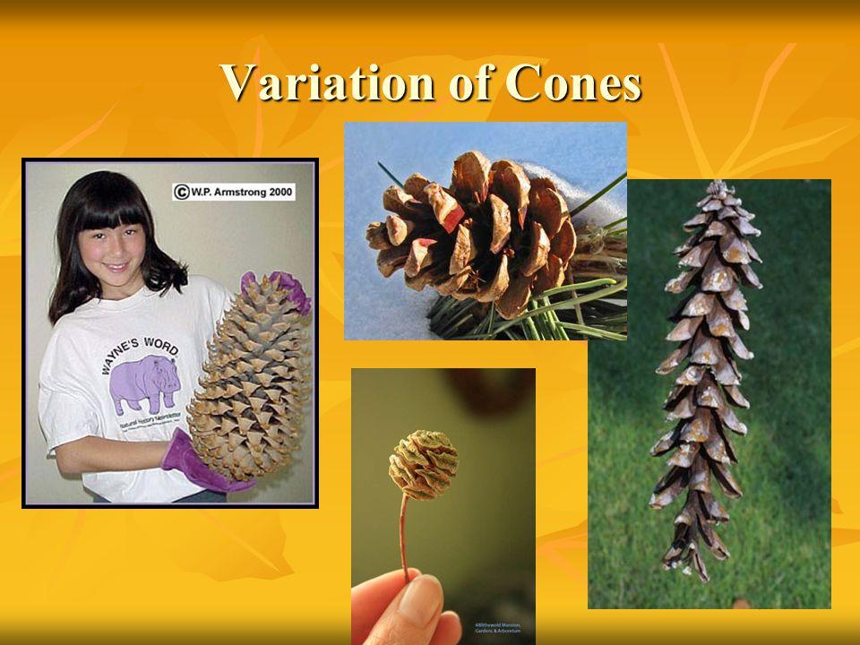 Variation of Cones