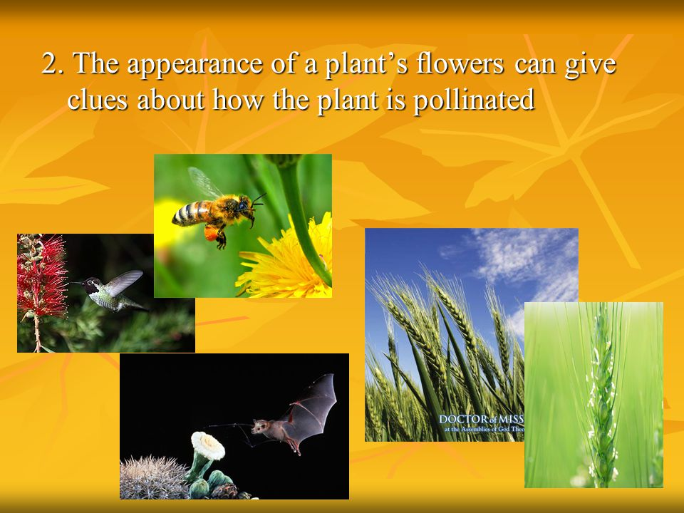 2. The appearance of a plant's flowers can give clues about how the plant is pollinated