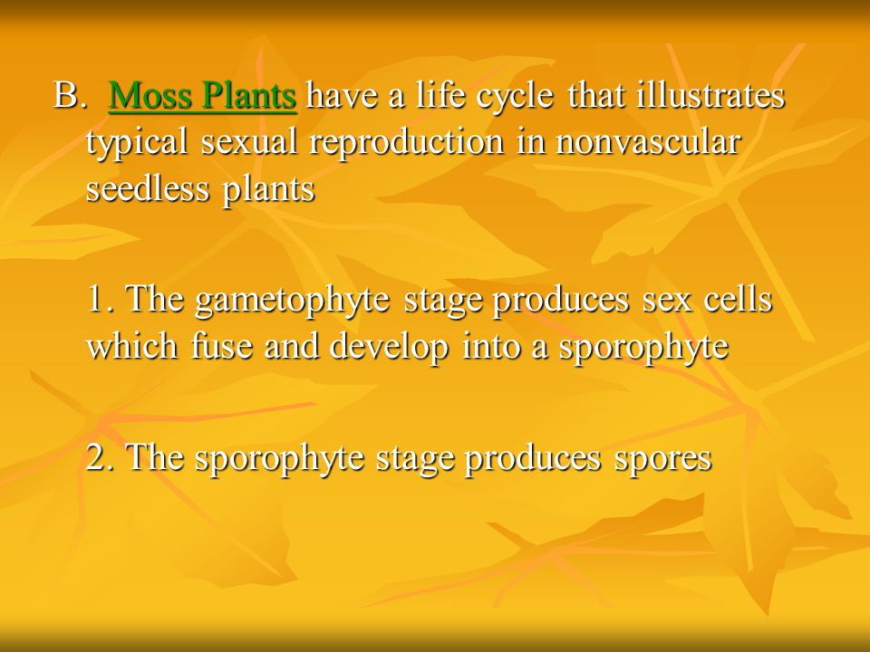 B. Moss Plants have a life cycle that illustrates typical sexual reproduction in nonvascular seedless plants 1. The gametophyte stage produces sex cel