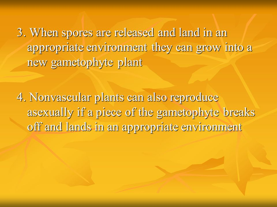 3. When spores are released and land in an appropriate environment they can grow into a new gametophyte plant 4. Nonvascular plants can also reproduce