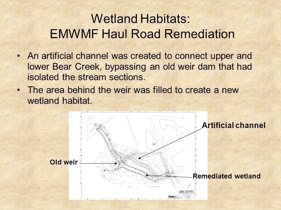Wetland Habitats: EMWMF Haul Road Remediation An artificial channel was created to connect upper and lower Bear Creek, bypassing an old weir dam that had isolated the stream sections.