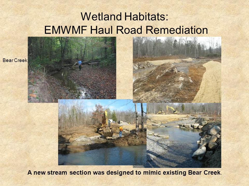 Wetland Habitats: EMWMF Haul Road Remediation Bear Creek A new stream section was designed to mimic existing Bear Creek.