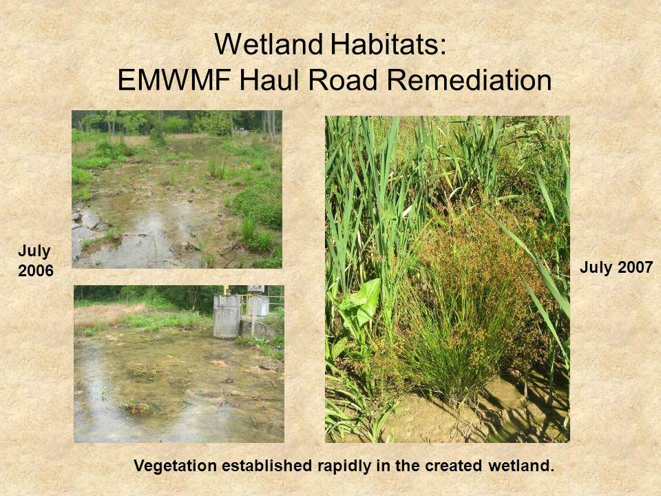 Wetland Habitats: EMWMF Haul Road Remediation Vegetation established rapidly in the created wetland.