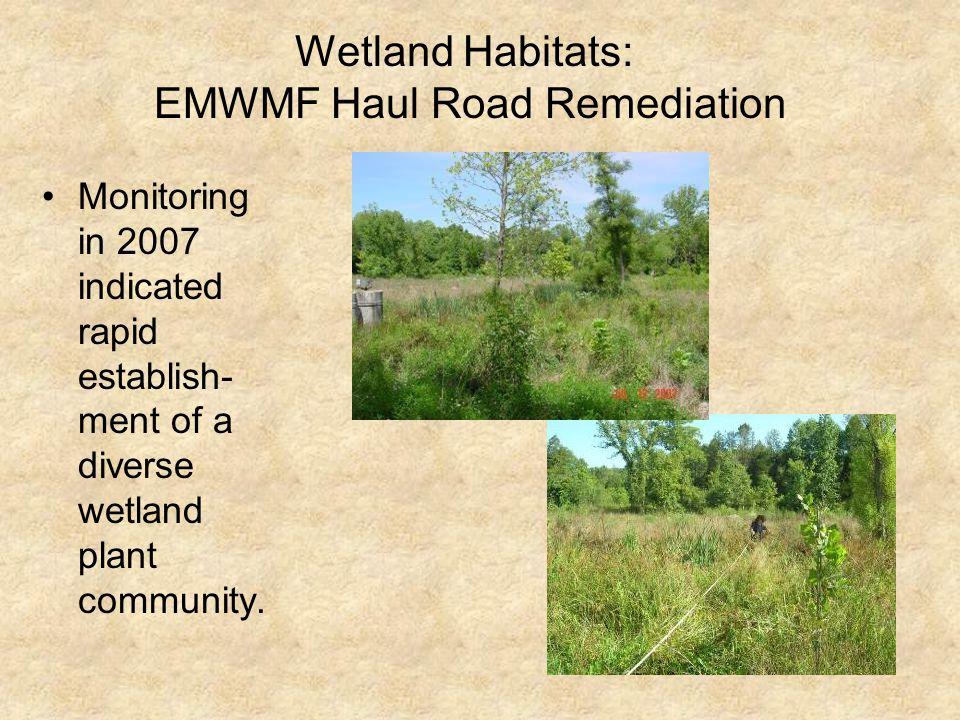 Wetland Habitats: EMWMF Haul Road Remediation Monitoring in 2007 indicated rapid establish- ment of a diverse wetland plant community.