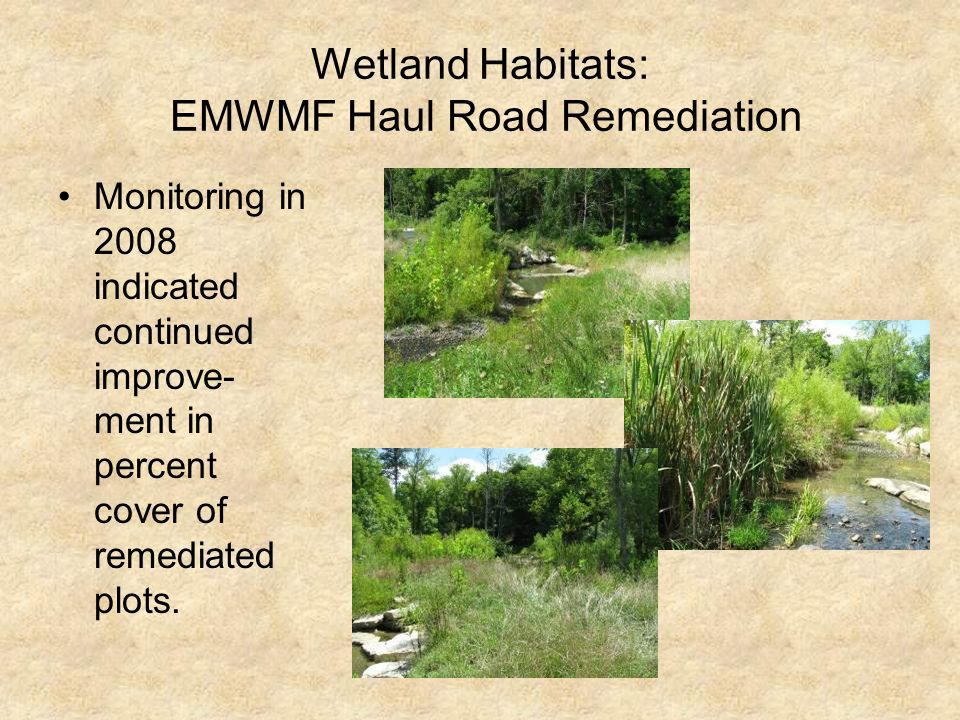 Wetland Habitats: EMWMF Haul Road Remediation Monitoring in 2008 indicated continued improve- ment in percent cover of remediated plots.