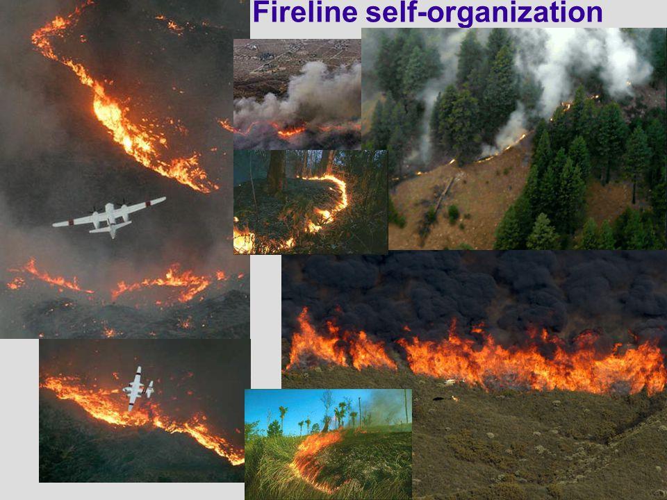 Fireline self-organization
