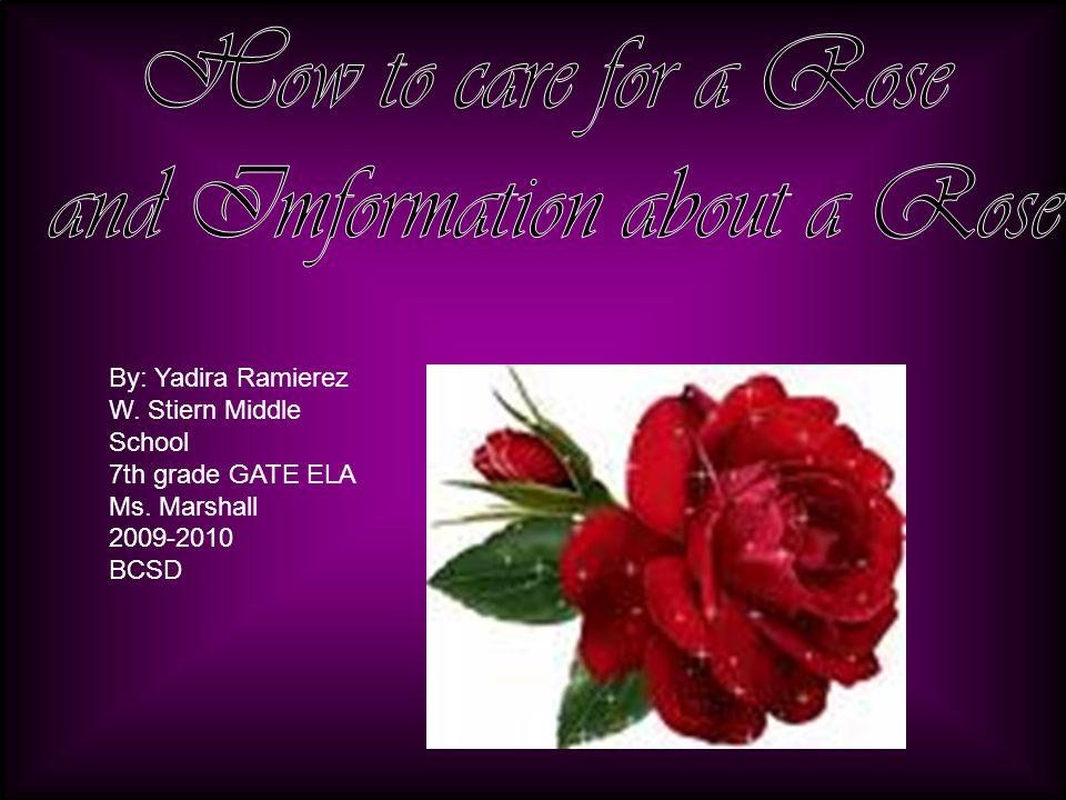 By: Yadira Ramierez W. Stiern Middle School 7th grade GATE ELA Ms. Marshall 2009-2010 BCSD