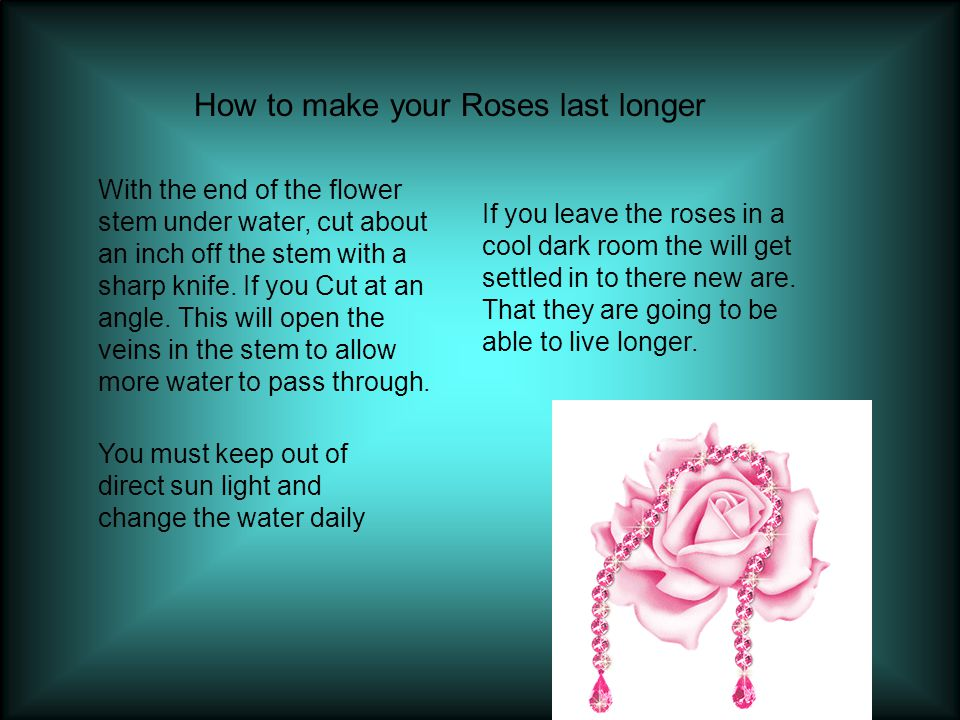 How to make your Roses last longer With the end of the flower stem under water, cut about an inch off the stem with a sharp knife.