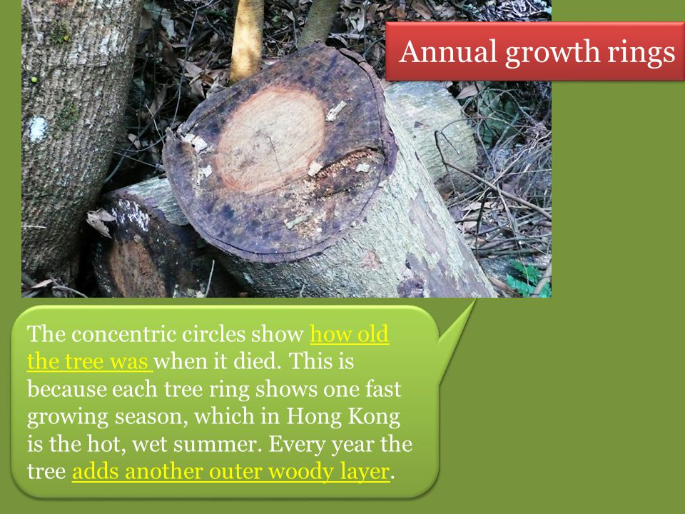 The concentric circles show how old the tree was when it died. This is because each tree ring shows one fast growing season, which in Hong Kong is the
