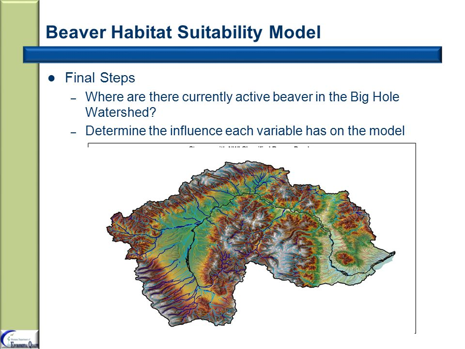 Beaver Habitat Suitability Model Final Steps – Where are there currently active beaver in the Big Hole Watershed.