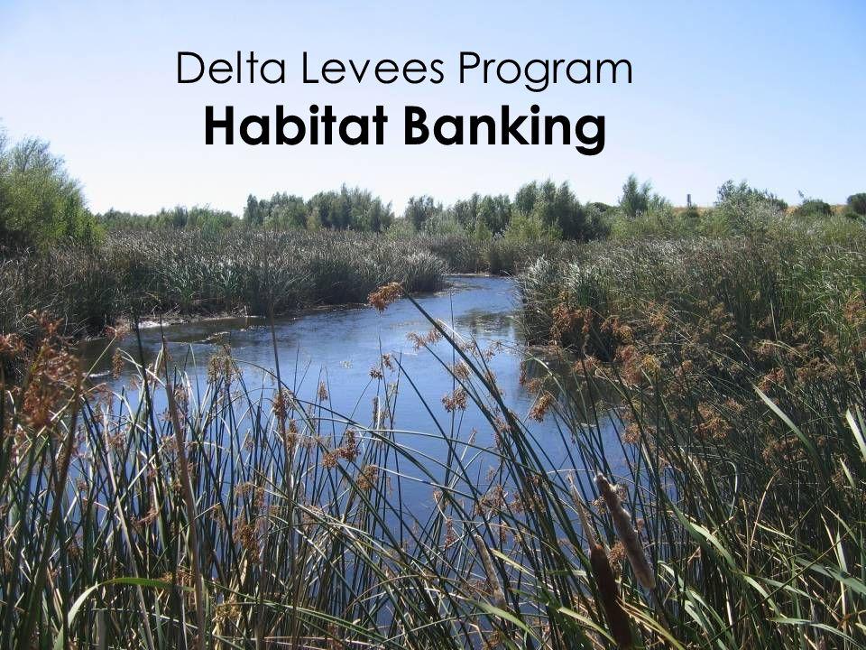 Delta Levees Program Habitat Banking 1