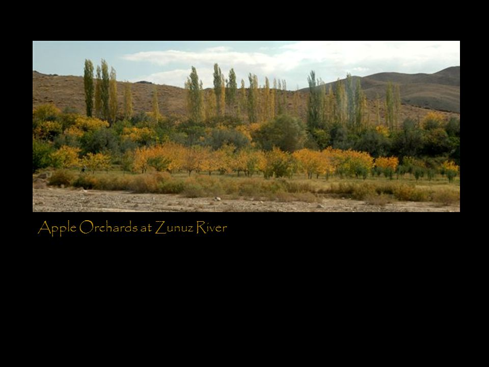 Apple Orchards at Zunuz River