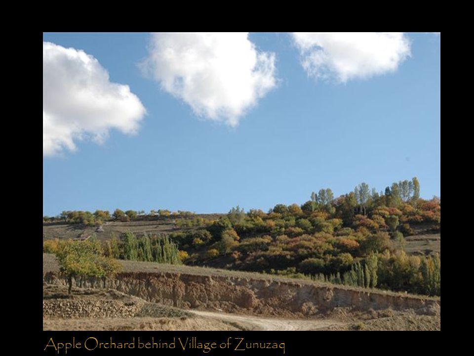 Apple Orchard behind Village of Zunuzaq