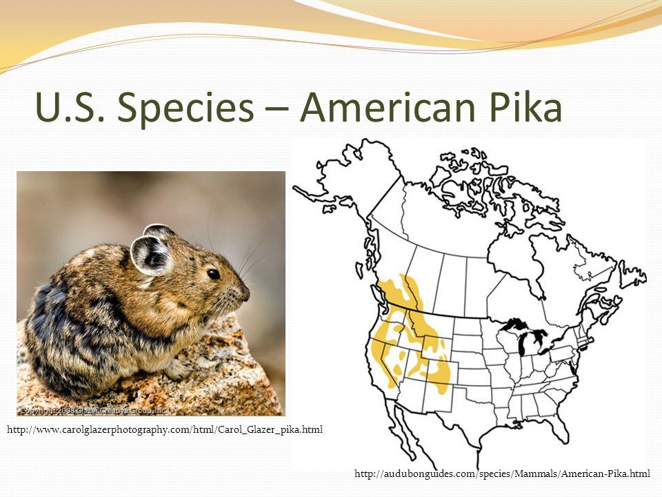 U.S. Species – American Pika http://audubonguides.com/species/Mammals/American-Pika.html http://www.carolglazerphotography.com/html/Carol_Glazer_pika.