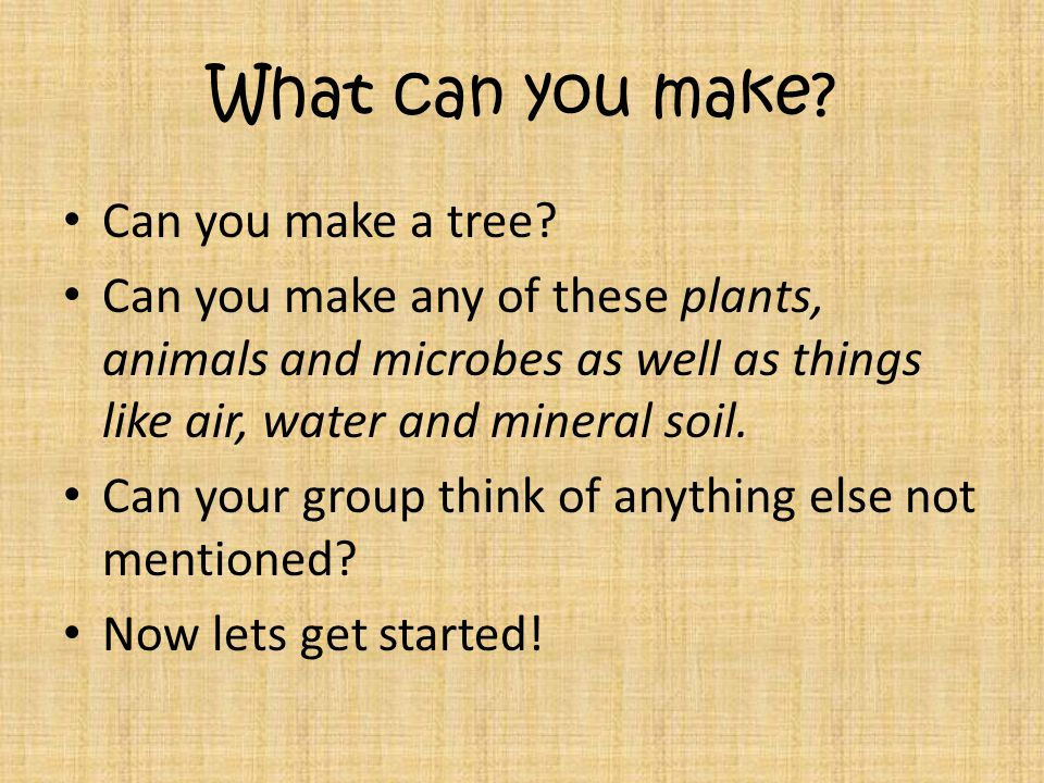 What can you make. Can you make a tree.