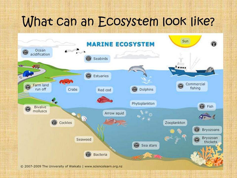 What can an Ecosystem look like
