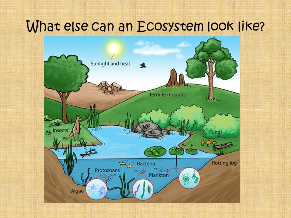 What else can an Ecosystem look like