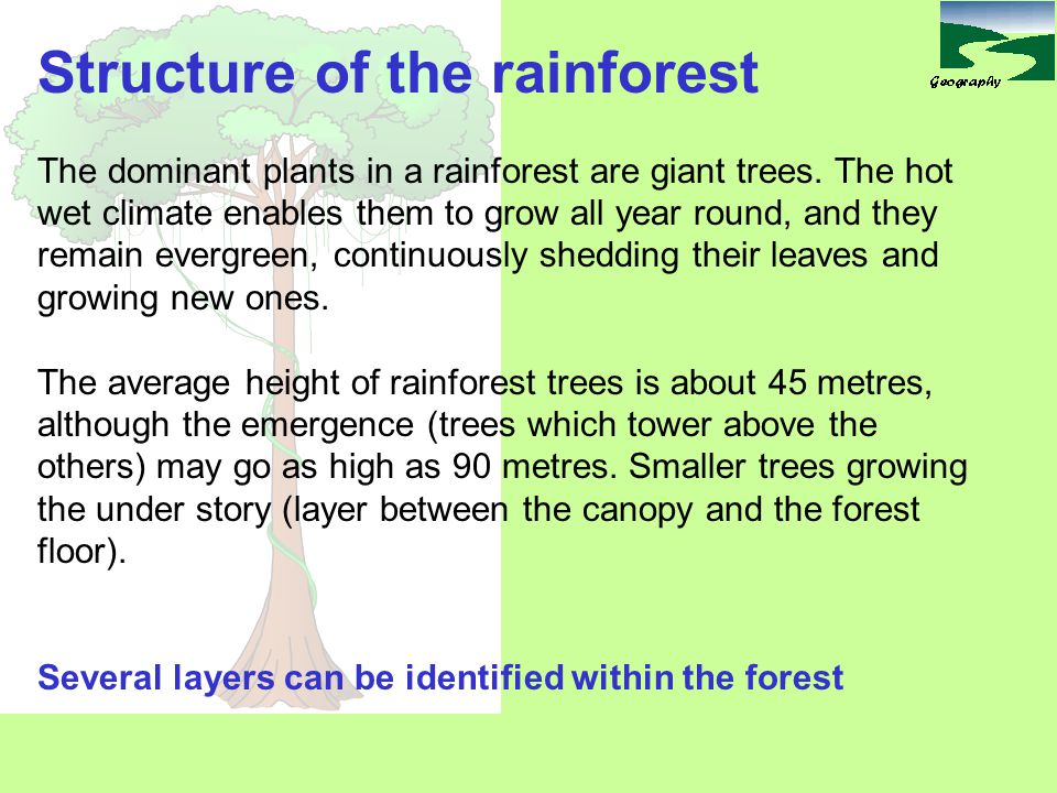 A Emergent tree canopy B Large trees of Middle layer C Lower tree layer D Shrub/small tree layer E Ground vegetation 5 10 15 20 25 30 35 40 45