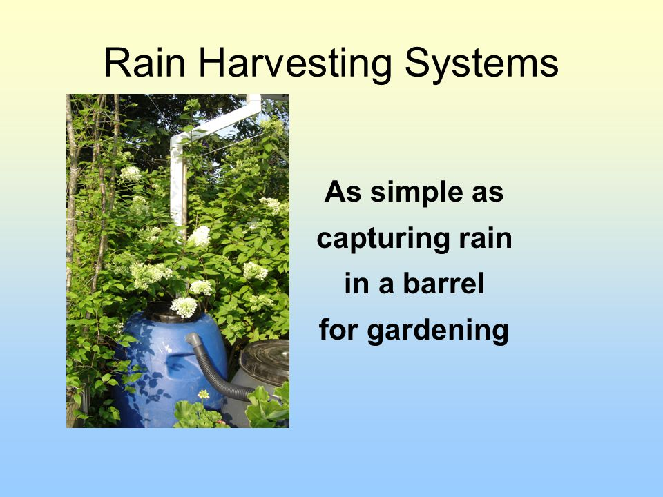 Rain Harvesting Systems As simple as capturing rain in a barrel for gardening