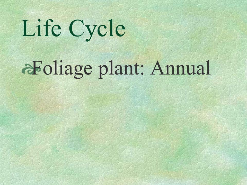 FAMILY  Euphorbiaceae