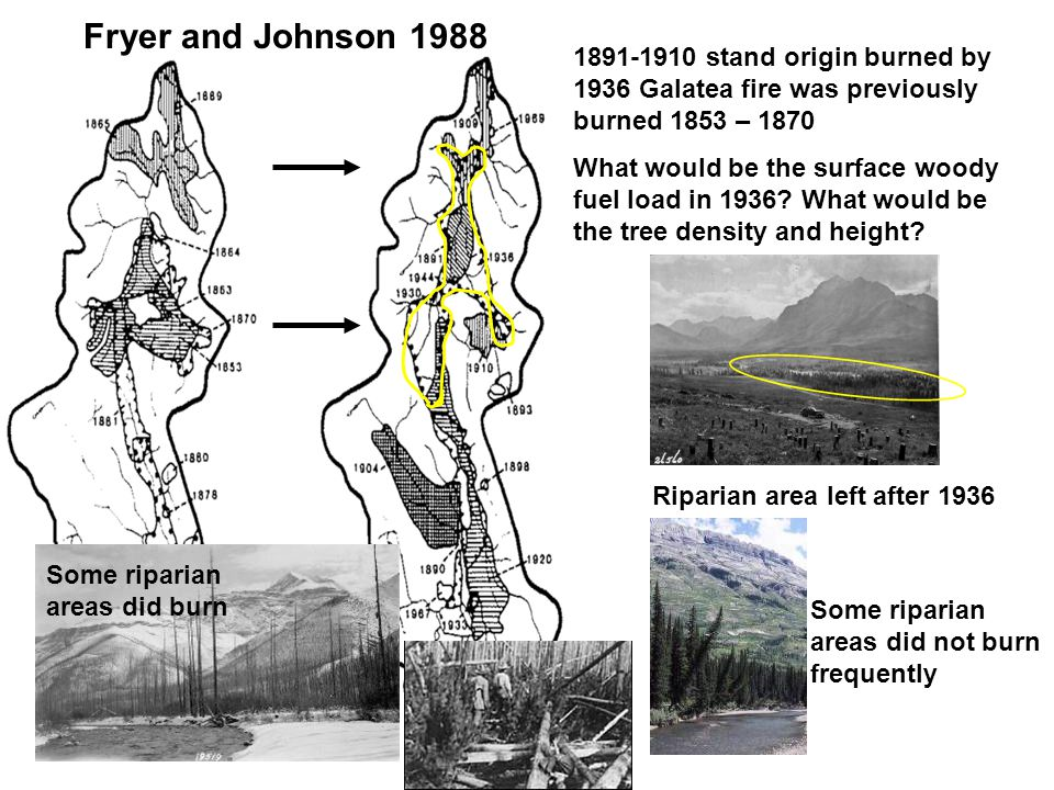 1891-1910 stand origin burned by 1936 Galatea fire was previously burned 1853 – 1870 What would be the surface woody fuel load in 1936.