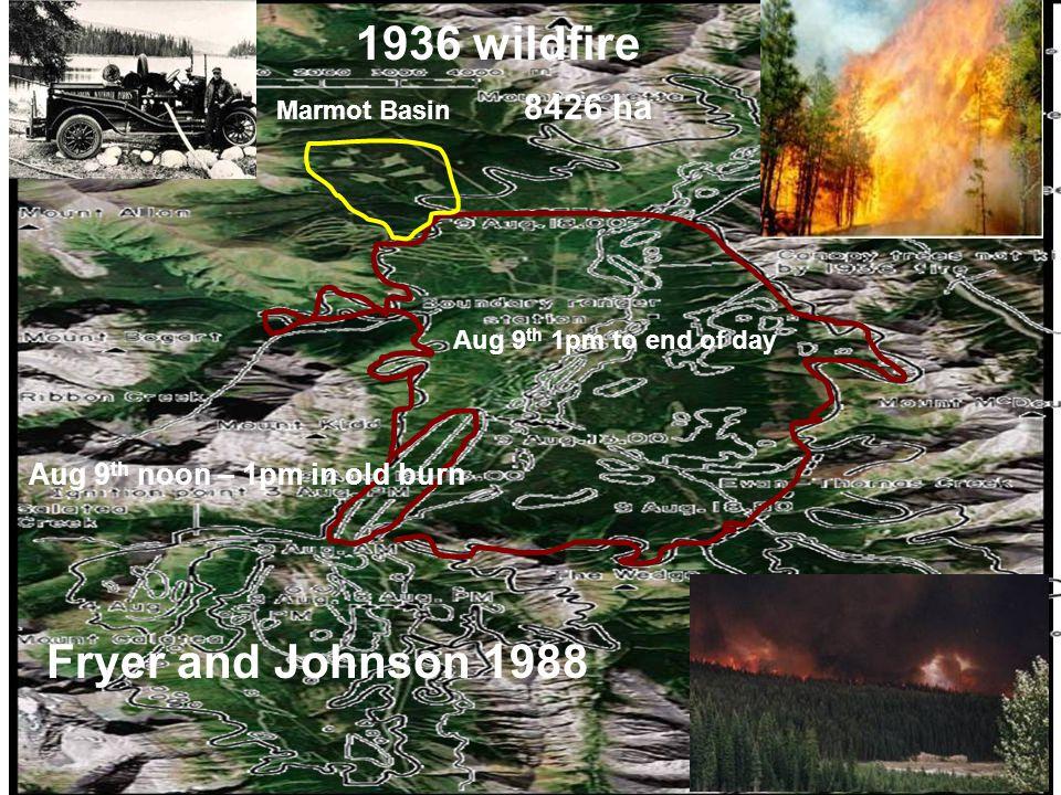 Aug 9 th 1pm to end of day Aug 9 th noon – 1pm in old burn Marmot Basin 1936 wildfire 8426 ha Fryer and Johnson 1988