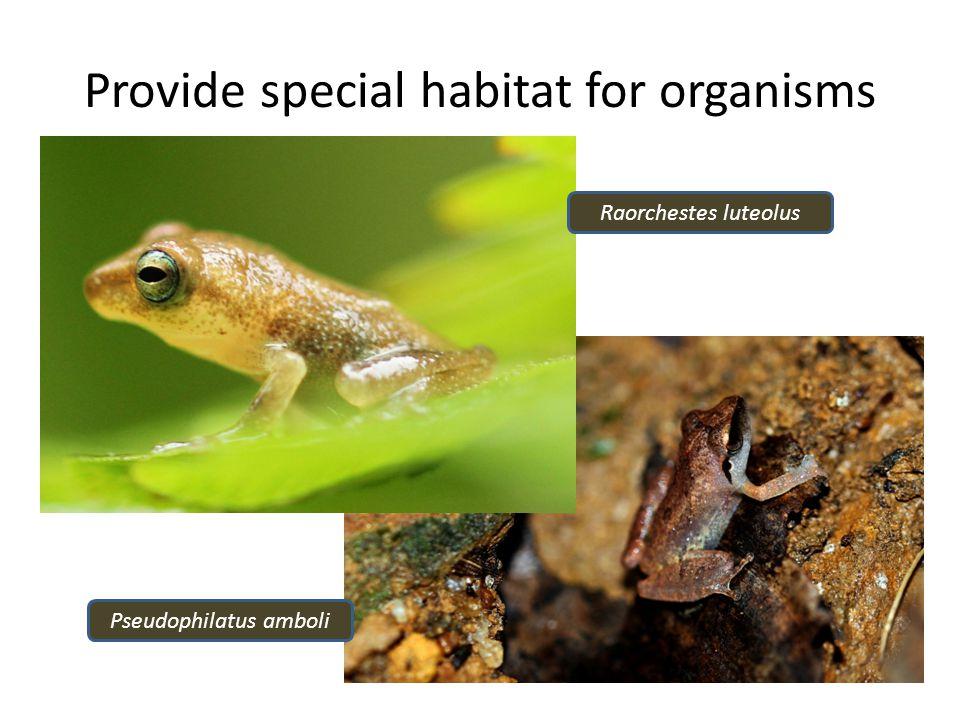 Provide special habitat for organisms Raorchestes luteolus Pseudophilatus amboli