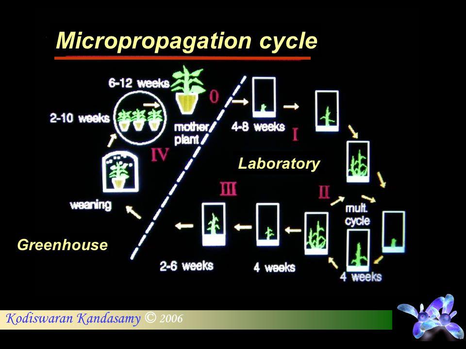 Kodiswaran Kandasamy © 2006 Micropropagation cycle Laboratory Greenhouse