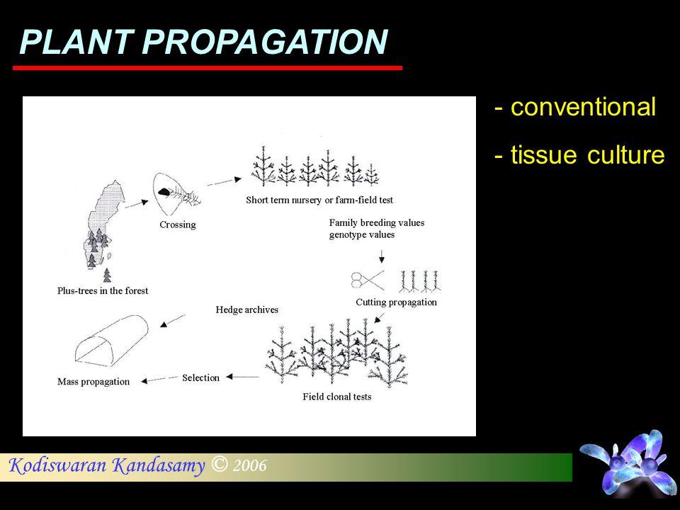 Kodiswaran Kandasamy © 2006 PLANT PROPAGATION - conventional - tissue culture