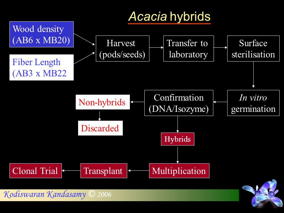 Wood density (AB6 x MB20) Fiber Length (AB3 x MB22 Harvest (pods/seeds) Transfer to laboratory Surface sterilisation In vitro germination Confirmation